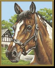 Malen nach Zahlen - Pferdeportrait