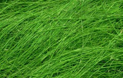 Sisal Naturfasern - grün
