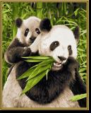 Malen nach Zahlen - Pandabären